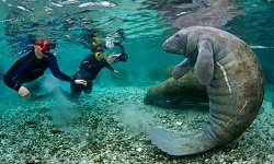Snorkeling and Manatee Tours
