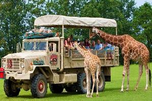 Six Flags Wild Safari