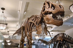 Rex Museum